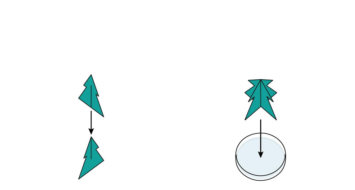 brics-xmas_xmas-tree_en_iks-s-04