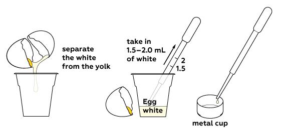 egg_yolk_from_white_en_iks-01