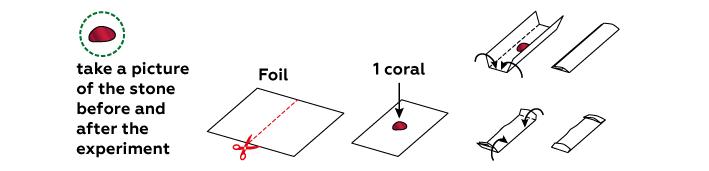 minerals_coral_en-01