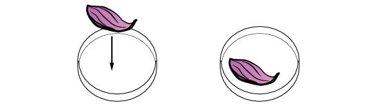plants_anthocyanin_bleaching_en_iks-01
